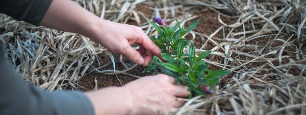 giardinaggio, pianta terra
