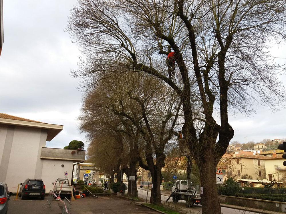 Potatura Piante Perugia - Cuore Verde